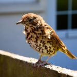 Practical advice for bird lovers and anyone who cares about wildlife